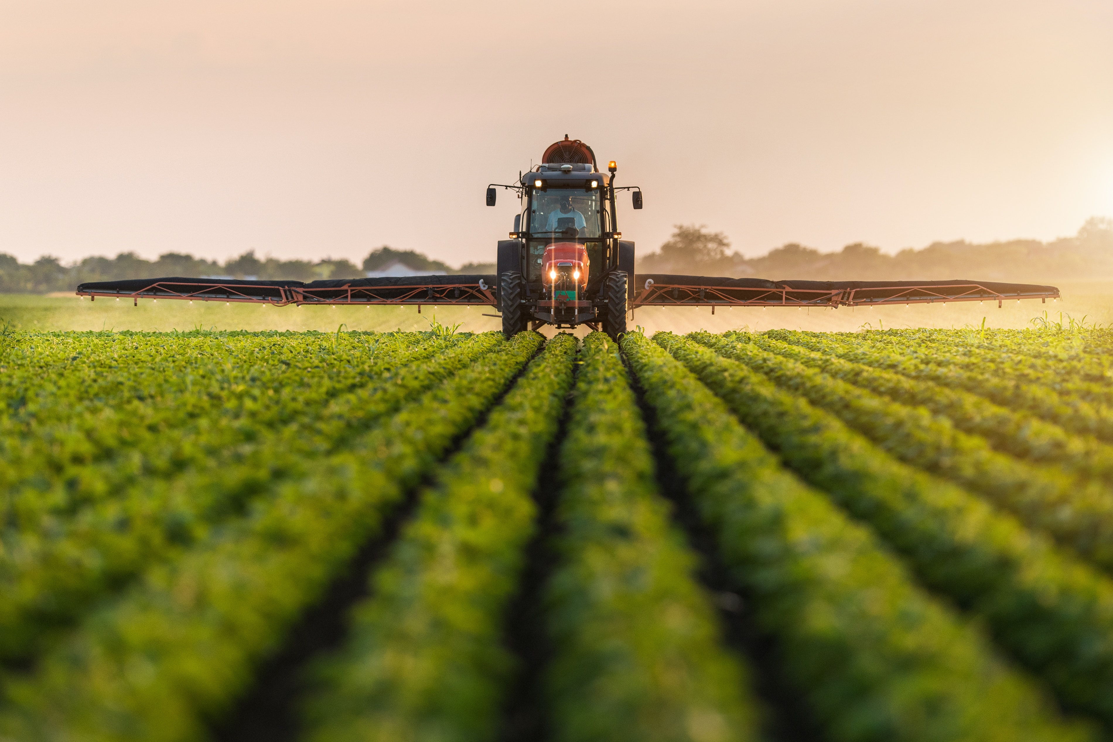 Tractor sprays pesticides on soybean field.
